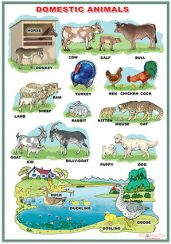 domestic_animals-wild_animals-1