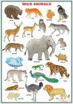 domestic_animals-wild_animals-2