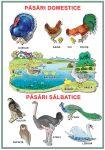 Planșă. Păsări domestice. Pasari sălbatice